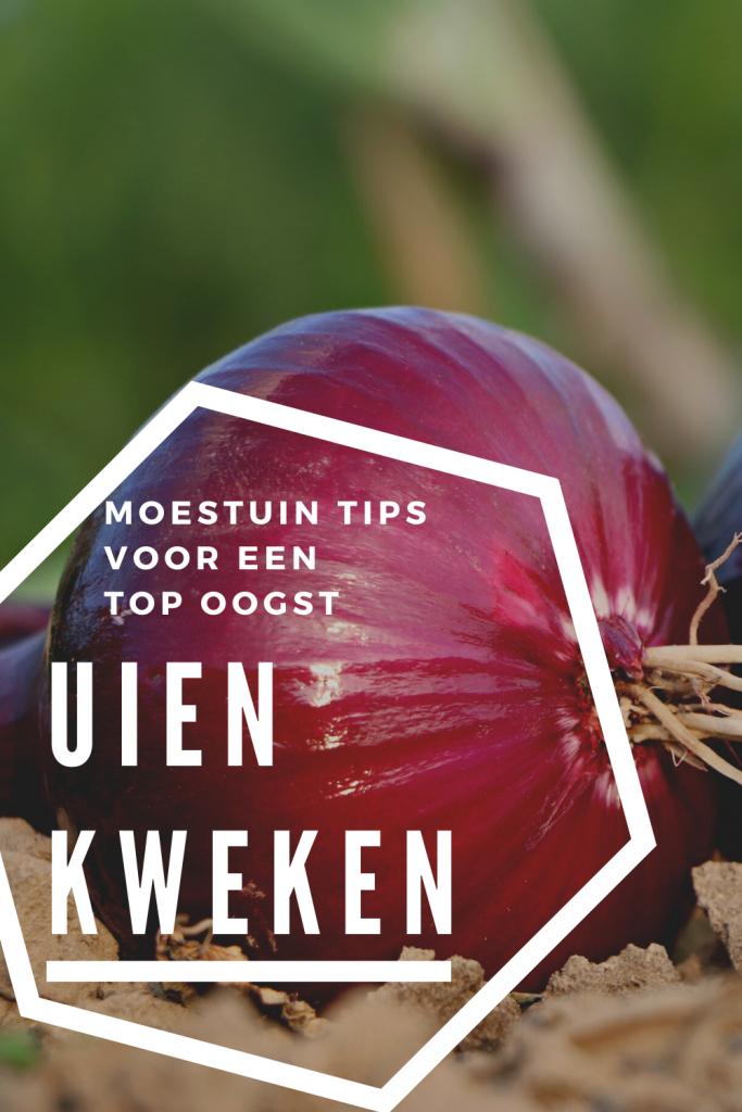uien kweken moestuin tips fromseedtotable.nl