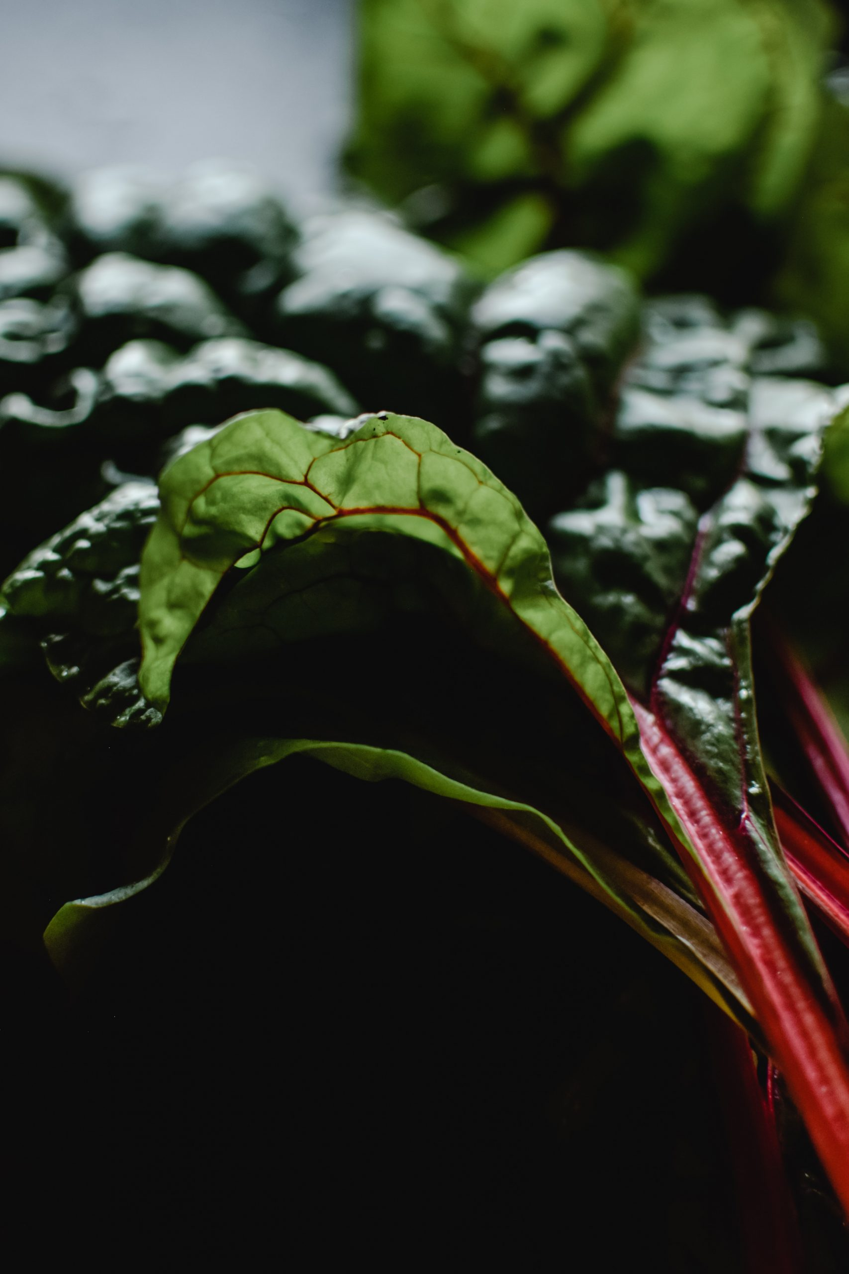 Rabarber in je moestuin dankzij deze moestuintips. Rabarber planten telen zaaien en succesvol oogsten uit jouw eigen moestuin.