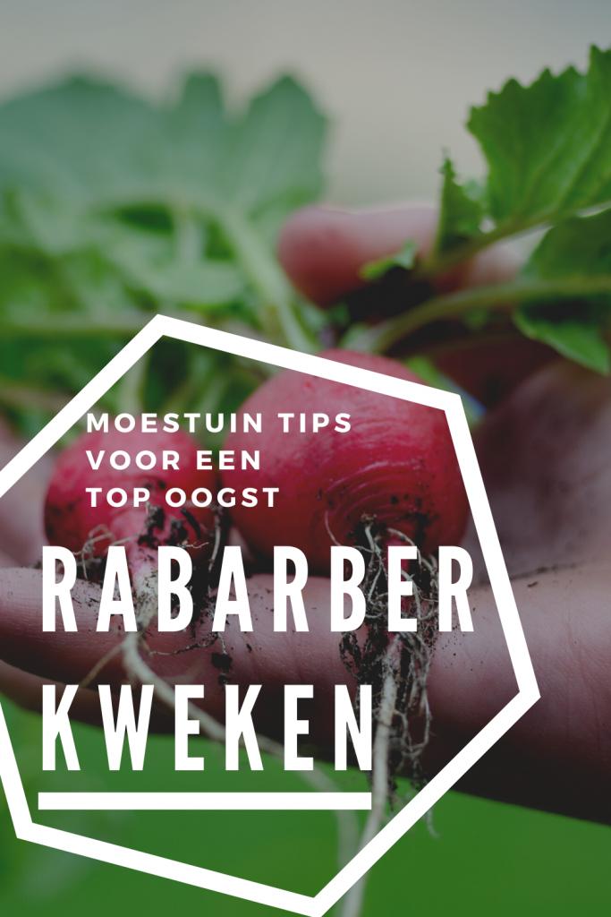 succesvol rabarber kweken in je eigen moestuin fromseedtotable.nl moestuintips