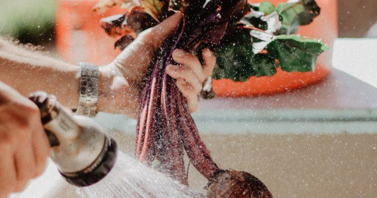 Bieten zaaien, kweken en succesvol oogsten in je eigen moestuin