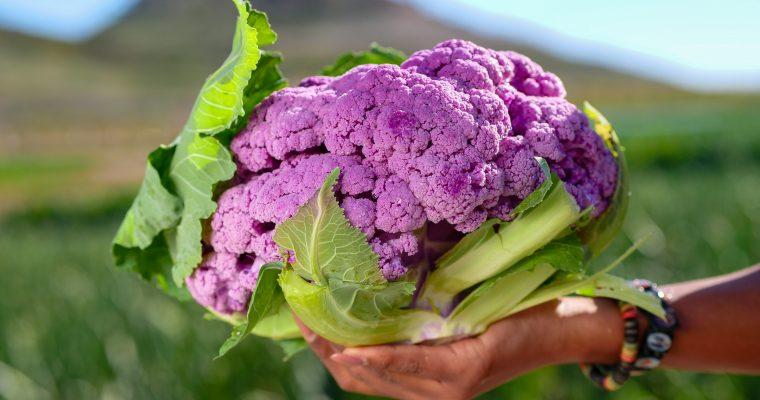 Bloemkool zaaien, kweken en succesvol oogsten in je eigen moestuin